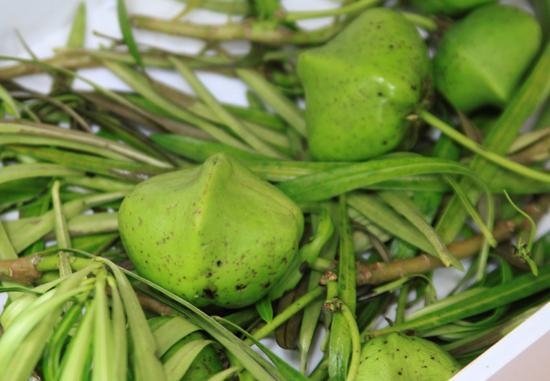 Không ai biết vì sao cái loại trái cây màu xanh, to bằng ngón chân cái lại có tên là trái dái khỉ.